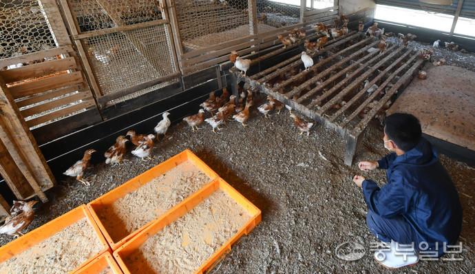 18일 오후 화성시 향남읍의 한 산란계 농장에서 관계자가 계사장을 관리 하고 있다.김근수기자